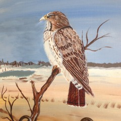 Brown Falcon Painting